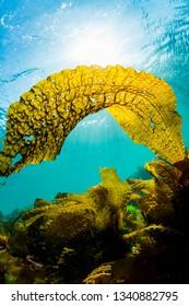 Seaweed and Sunlight