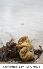 Seaweed washed up on Cornish Beach
