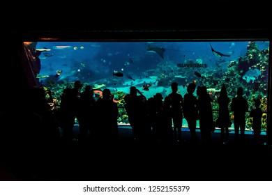 SEAWORLD,GOLD COAST, AUSTRALIA -8th OCTOBER 2018:-Shark Bay at seaworld, gold coast.