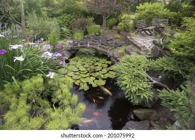 A secluded koi pond surrounded by Japanese irises and a variety of dwarf evergreens in a private backyard provide a quiet place to retreat from the pressures of life.