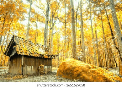A secluded old wooden cabin in an autumn forest, beautiful colors shade of leaves in season specific. Focus on cabin.
