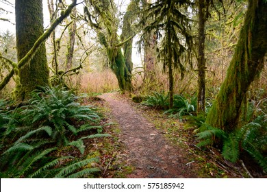 Secluded Path at Olympic National Park