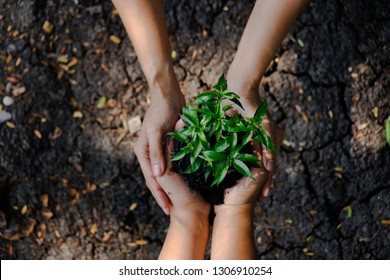 The second hand helps to hold the seedlings to be planted in the soil, conserving nature.