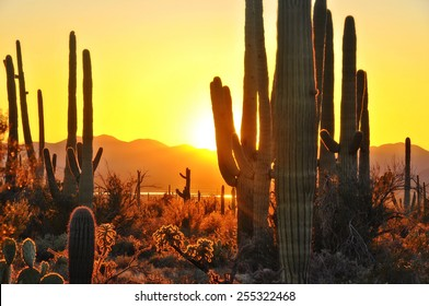 Second Sunset at Saguaro National Park near Tucson Arizona.