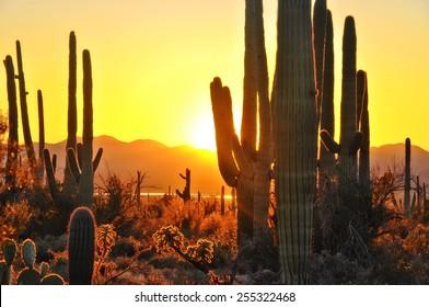 Second Sunset at Saguaro National Park near Tucson Arizona.
