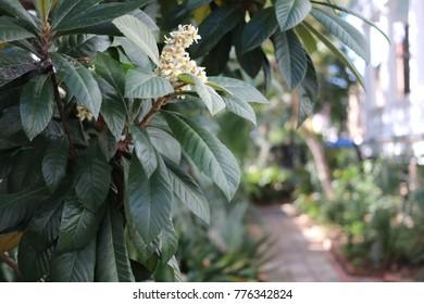 Secret Charleston Garden