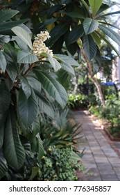 Secret Garden Pathway Charleston
