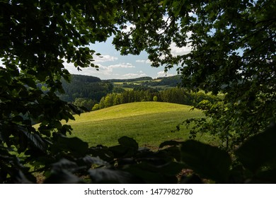 A secret lookout out of forest, viewing a nice hilly meadow with forests and hills in the background.