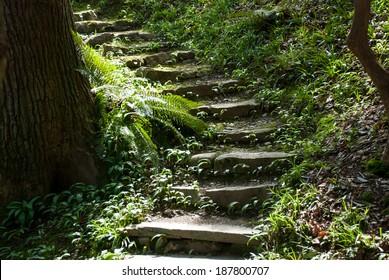 Secret steps in garden.