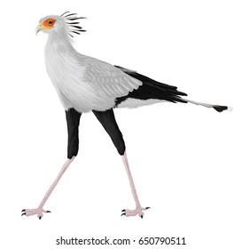 Secretarybird. Illustration. Digital.