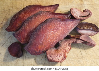 Section by fungus liver Fistula Needles or Beefsteak fungus also known as ox tongue (Fistulina hepatica)