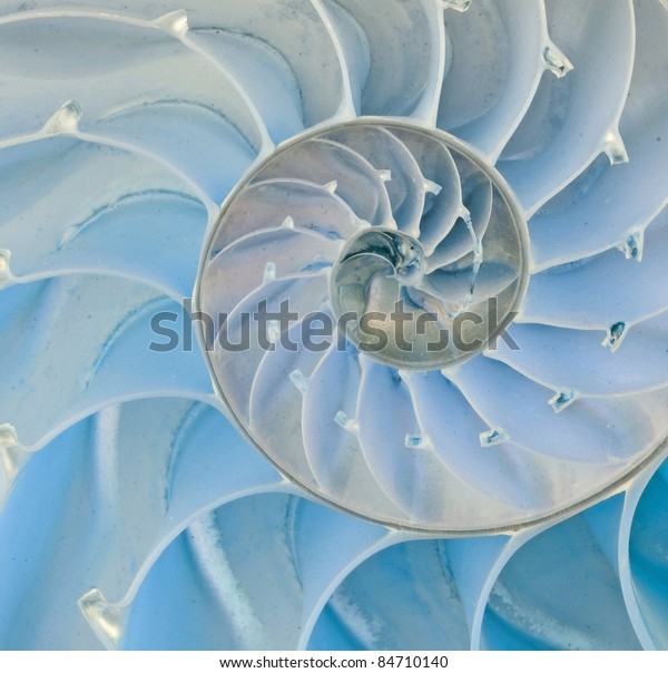 Section of nautilus shell