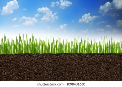 Section or profile of natural soil with green grass under the clear blue sky