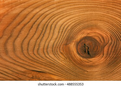 section of the trunk with annual rings. background, texture of natural wood