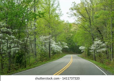 Sections of the Foothills Parkway with Dogwoods blooming.