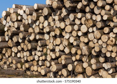 Sections of pine and spruce logs. Mountain pine and spruce logs ready to be loaded onto timber. Felled trees.