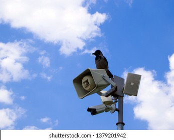 Security CCTV camera and loudspeaker on the pole. Surveillance system is supplemented by a bird (crow), which also monitors what is happening. The concept of total control.