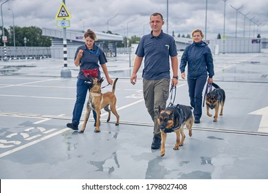 Security workers with German Shepherd dogs and Malinois dog strolling down the airport