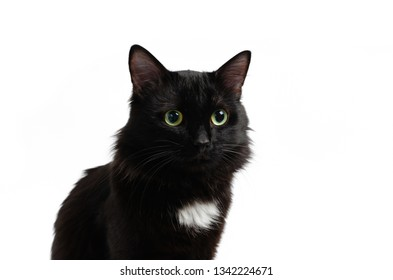 Sedentary black, beautiful and cute cat on white background, isolate.