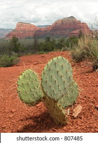 Sedona Arizona mountains with Opuntia prickly pear cactus.