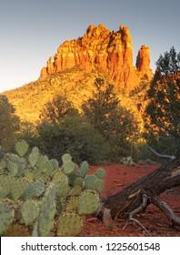 Sedona,  Arizona, a tree changing in fall colors.