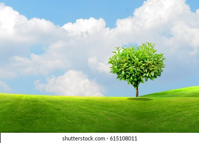 See the beautiful tropical backdrop tree cut on the meadow and sky background.