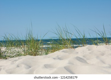 See grass in the dunes of the baltic see