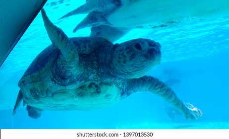 see the swimming of a sea turtle close up, the image of a sea turtle swimming in the clear water.