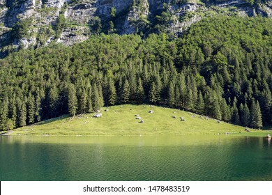 Seealpsee in Ebenalp valley in beautiful sommer time with blue water and green meadow reflection and forest, Appeenzellerland, Switzerland