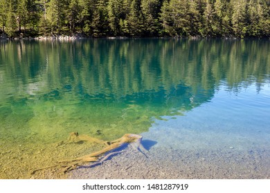 Seealpsee in Ebenalp valley in beautiful sommer time with blue water and tree root reflection and forest, Appeenzellerland, Switzerland