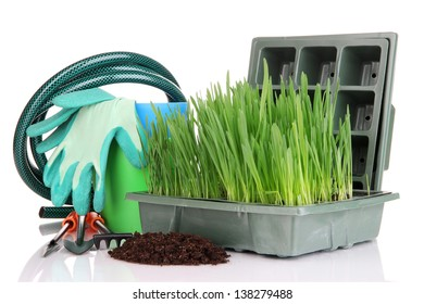 Seed box with seedling isolated on white