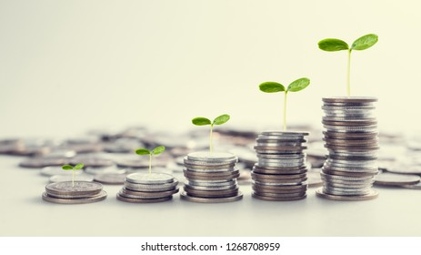 Seed Growing on rows of coins for finance and business concept background, saving invesment concept.
