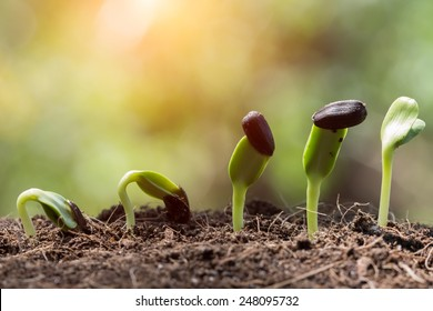 seed root on soil with sunbeam new life start concept