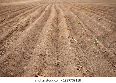 Seed sowing furrows in the field