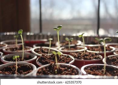 Seed Starting In Spring. Fresh Start.