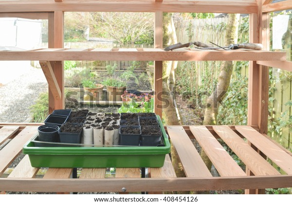 Seed tray inside small wooden greenhouse in domestic garden ready for sowing sweet pea seeds - including cardboard toilet roll inners