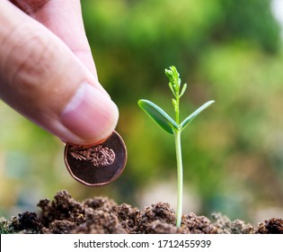 seed to tree, Planting a small plant on a pile of soil on green bokeh background. coin stack with young green. Business success, money growing concept