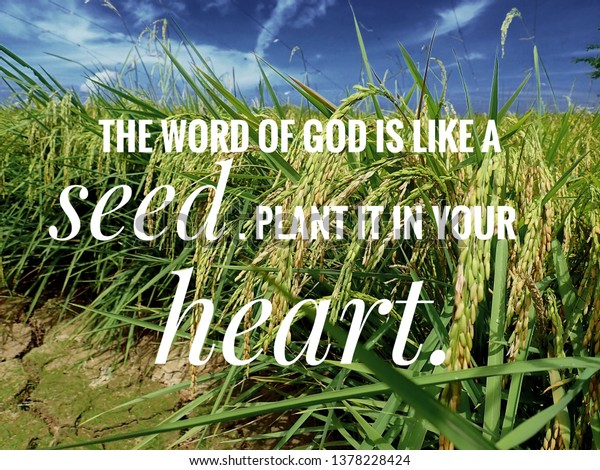 Seed Word God Bible Verse Day Stock Photo (Edit Now) 1378228424