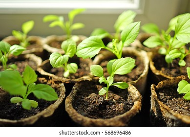 The seeding on the window.
