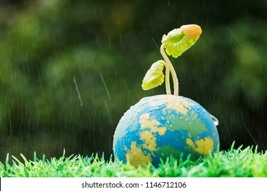 Seeding plants on clay Globe model on raining sunny day on green grass, Green World Environment ecology day, Life on earth, Concept of new development for business leadership and strong in future