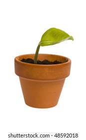 seedling in flowerpot