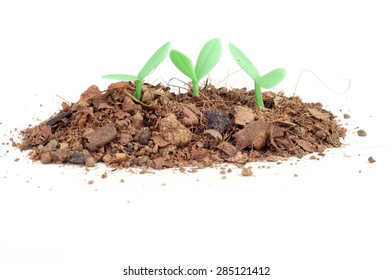 Seedling grow from soil (fake seedling)