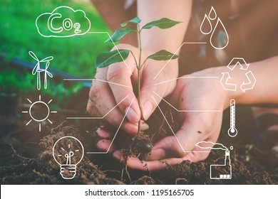 Seedling growing from fertile soil was gently encircled with hands showing recycling icon symbol, Concept of environmental conservation and protection of our world sustainable.