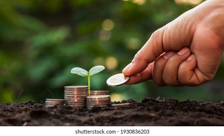 A seedling growing on a pile of coins and a hand that is giving coins to the tree, ideas for saving money and growing economically.