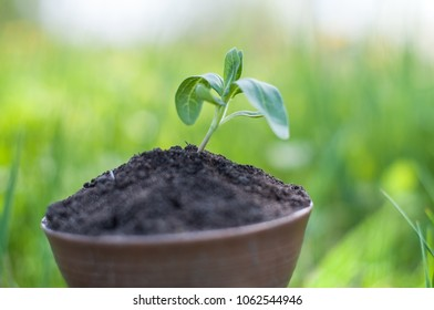 The seedling are growing from the rich soil to the morning sunlight that is shining, ecology concept.