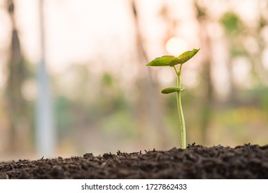 the seedling are growing from the rich soil to the morning sunlight that is shining and green nature bokeh background, new life growth ecology business financial progress, earth day, ecology concept