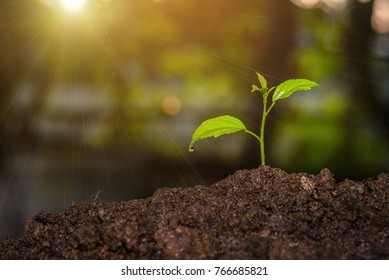 The seedling are growing in the soil with the backdrop of the light of the sun. / World Soil Day