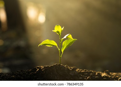 Seedling are growing in the soil with the backdrop of the light of the sun.