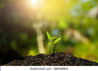 Seedling are growing in the soil with water drops and sunlight and lens flare. World Soil Day.