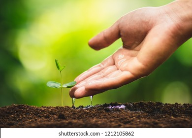 Seedling growth Planting trees Watering a tree Natural light
